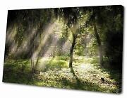 Landscape Canvas
