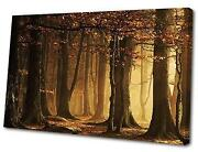 Woodland Canvas Prints
