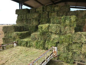 Lucerne / Grass Hay &  Silage Hagley Meander Valley Preview