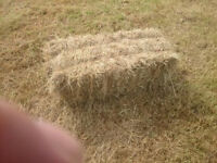 hay for sale small square bales