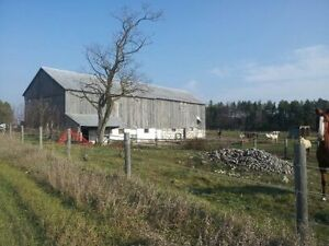 Horse Barn 15 acres for rent near Pontypool
