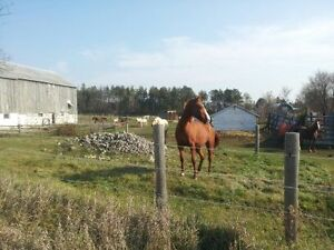 Free horse boarding in exchange for barn supervision