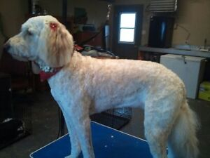 DOGGY STYLE GROOMING Cornwall Ontario image 9