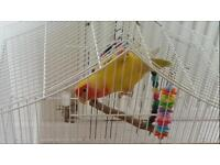 Cage and love bird