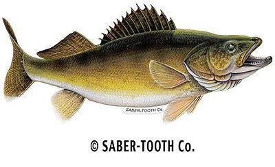 "WALLEYE medium right facing fish decal 12"" x 5.5"""