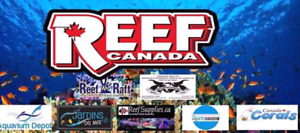 New saltwater fish/reef group