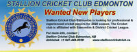 STALLIONS CRICKET CLUB