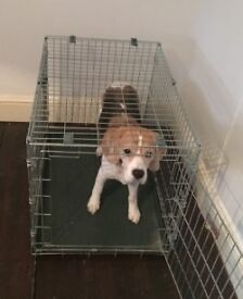 "22"" Metal Dog Crate (dog not included)"