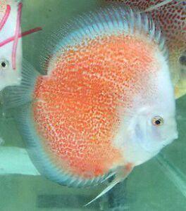 Buy fish online Kogarah Rockdale Area Preview