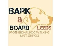 Dog walker with home boarding licence and insurance