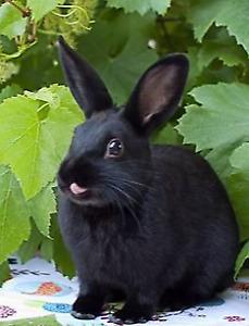 Playful baby bunny