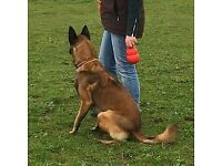Group and One to One Dog Training