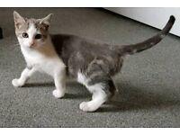 Handsome '007' Kitten