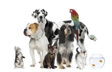 pets for sale, buy and Rehome Perth on Facebook Caversham Swan Area Preview