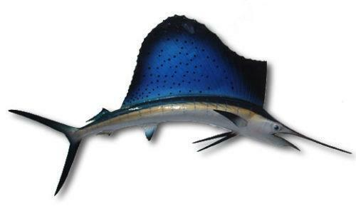 sailfish mount sporting goods ebay