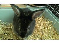 Rabbit boy.