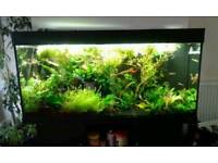 Juwel Rio 300 planted fish tank