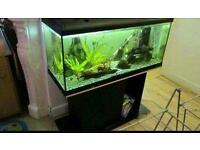 Juwel fish tank 110 litter