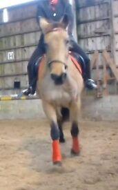 Horse rider wanter