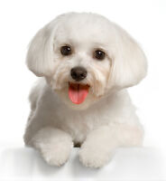 Pet Groomer : Professional, Affordable, 35+ years Experience