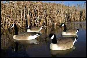 Wanted**Geese and duck decoys $$$ now Kingston Kingston Area image 1