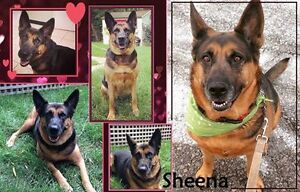 RUNNING OUT OF TIME FOR SHEENA, PLEASE HELP.