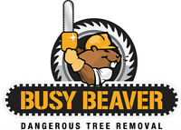 TREE REMOVAL - BUSY BEAVER SERVICES
