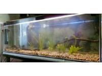 6foot fish tank