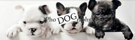 Ipswich PhoDOGraphy - Dog Photography