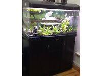 aquastyle 980 curved glass aquarium