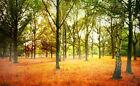 Trees Photo Studio Background Materials