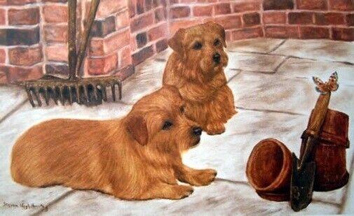Norfolk Terrier Limited Edition Art Print A Curious Pair by Steven Nesbitt*