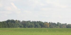 Attractive 75 Acres Farm/Bush land For sale (not in Ottawa) Kitchener / Waterloo Kitchener Area image 3
