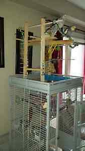 Very Large cage with 2 Cockatiels Cambridge Kitchener Area image 1