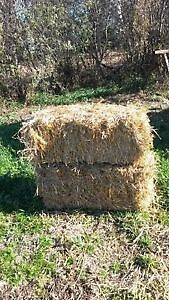 small square bales wanted