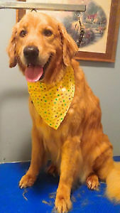 Steph's Dog Grooming Accepting New Clients- Tavistock Stratford Kitchener Area image 8