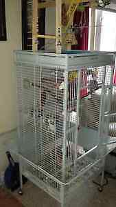 Very Large cage with 2 Cockatiels Cambridge Kitchener Area image 8