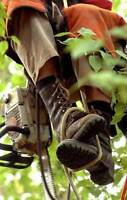 TREE SERVICES/INSURED ARBORISTS- REASONABLE RATES.