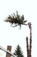 GERRY'S CHEAPEST TREE REMOVAL SERVICES