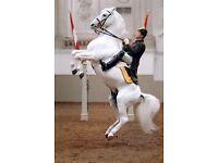Birmingham The Spanish Riding School of Vienna