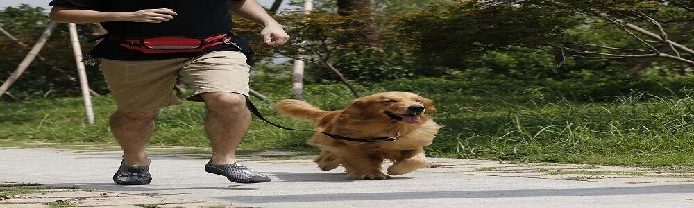 Dog-Wild
