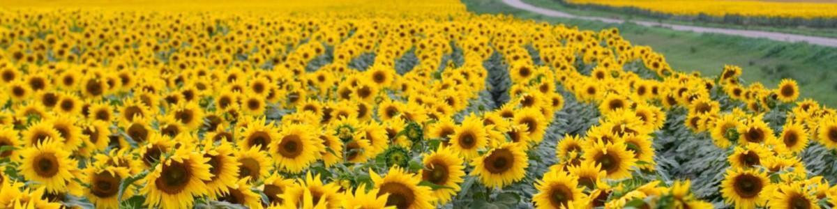 jennyflower