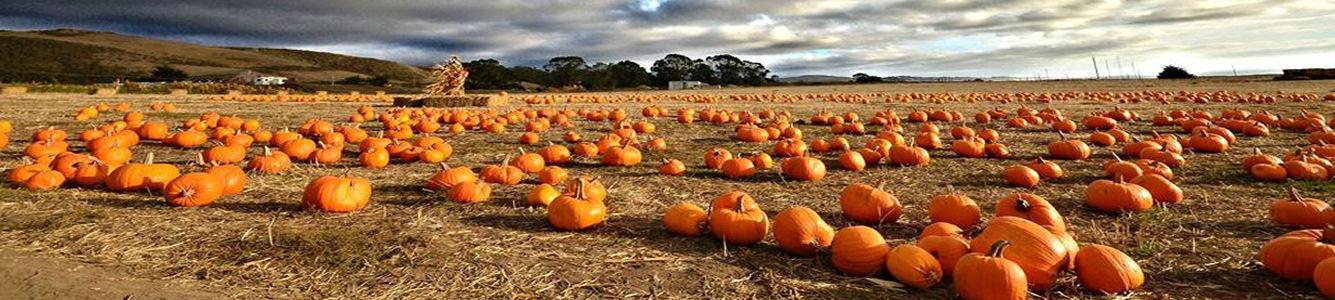 The Rustic Pumpkin