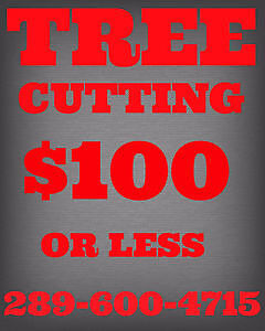 TREE CUTTING,TRIMMING,PRUNING,REMOVAL.