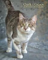 """Adult Male Cat - Domestic Short Hair: """"Shaw"""""""