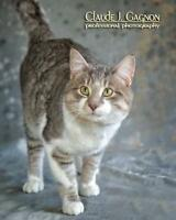 "Adult Male Cat - Domestic Short Hair: ""Shaw"""