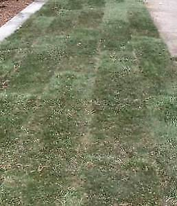 Landscaping Sod Grass
