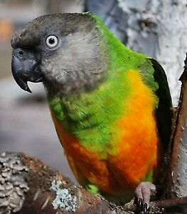 Looking for This Parrot