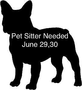 Looking for pet sitter