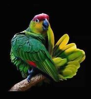 Accepting unwanted Parrots / Accepter perroquet indésirable